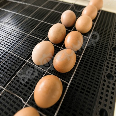 Инкубатор Золушка на 70 яиц (автомат, цифровое табло, гигрометр, 220+12В)